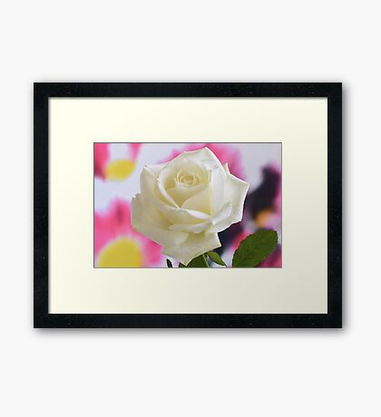 Aesthetic Rose. Framed Print