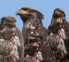 Birds Of A Feather Flock Together by Gail Bridger
