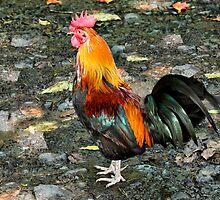 Moa Red Jungle Fowl by Teresa Zieba