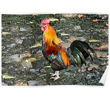 Moa Red Jungle Fowl Poster