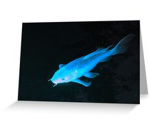 Kewl Koi - in Blue Greeting Card