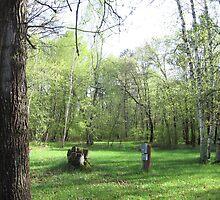 Boy Scout Campsite by silverdragon