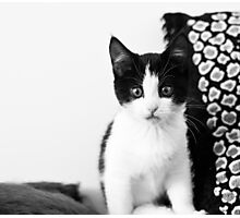 Meet Candy Photographic Print