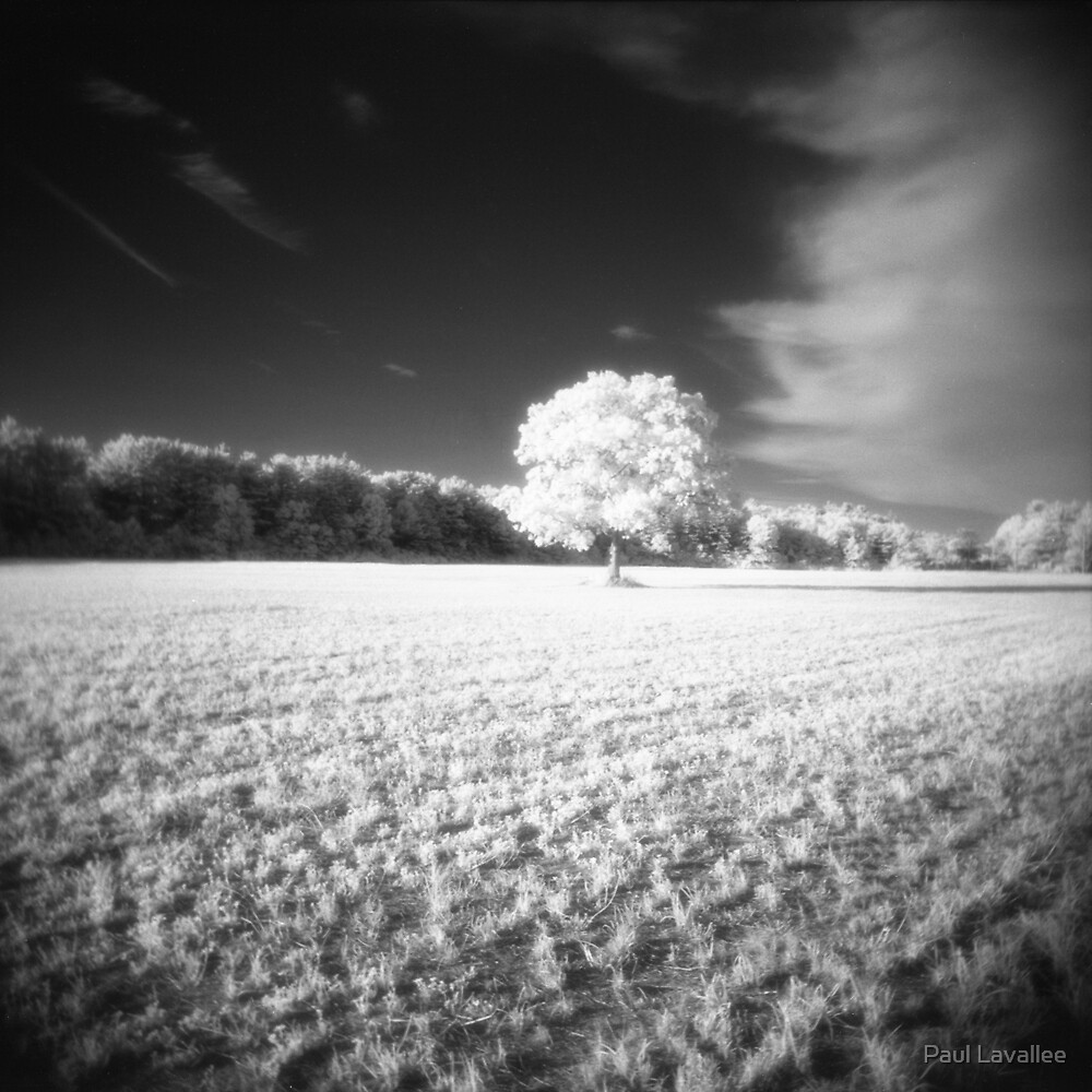 Holga Infrared Tree #7 by Paul Lavallee