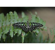 Black and Green Butterfly on Green Leaf Photographic Print