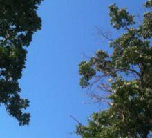 Sky Through The Trees Sticker
