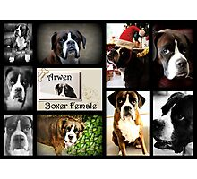 Images Of Arwen Photographic Print