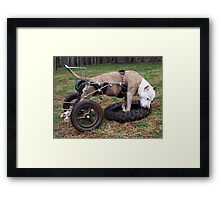 My Old Friend Penny - RIP Beautiful Girl Framed Print