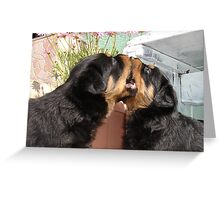 Sibling Rivalry - Arguing Like Dog and Dog Greeting Card