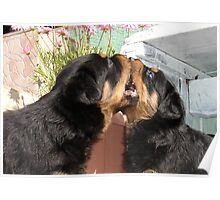 Sibling Rivalry - Arguing Like Dog and Dog Poster
