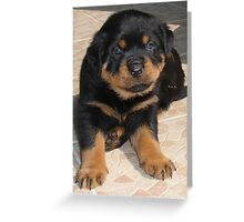 Perplexed Rottweiler Greeting Card