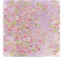 Watercolor Cherry Blossoms on Lavender Pink Wash Photographic Print