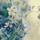 Forget-me-not by muflena