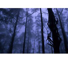 Forest Mist Photographic Print
