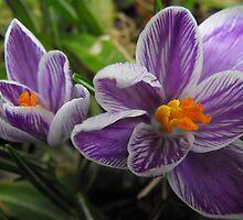 Spring by Tracy Wazny