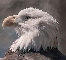 Eagle Portrait by KathleenRinker