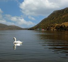 The Swan & The Steamer by Asterixphoto
