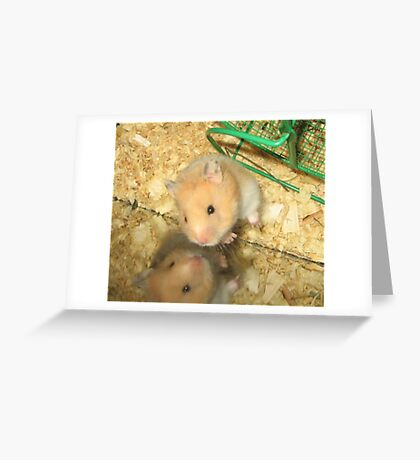 Buttered Popcorn the Hamster Greeting Card