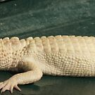 Albino Gator by BobJohnson