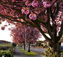Suburban Spring by Geoff Carpenter