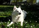 Sylvie Surveys on Squirrel Watch, Front Yard in April Series 2009 by Jack McCabe
