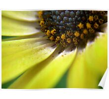 PollenFlower Poster