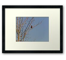 Robin Red-Breast In A Tree Framed Print