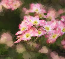 Spring Pink Dogwood by shuttermom