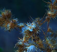 Thistle flower by ndarby1
