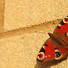 Peacock butterfly by ChrisHarvey67