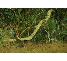 Falling limb Photographic Print
