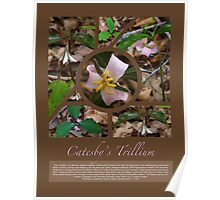 Catesby's Trillium Poster Poster