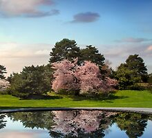 Cherry Tree Reflections by Jessica Jenney