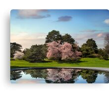 Cherry Tree Reflections Canvas Print