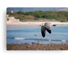 Coastal flyer Canvas Print