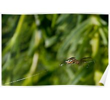 Orb Weaver - Spider on its web Poster
