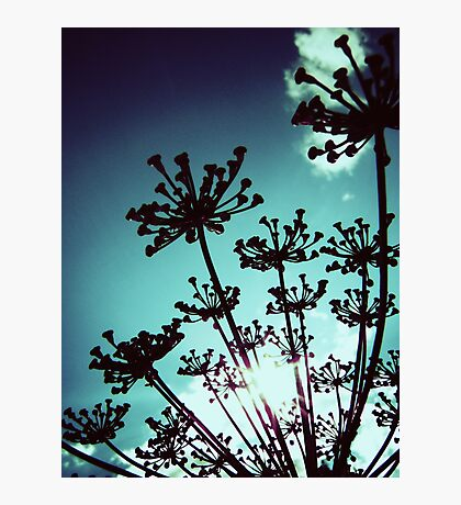 Fennel Photographic Print