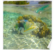 Trigger Fish Poster