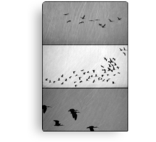 Ibis - Triptych Canvas Print