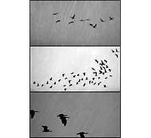 Ibis - Triptych Photographic Print