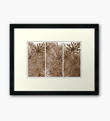 Parsley Heads - Triptych Framed Print
