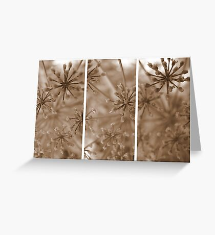 Parsley Heads - Triptych Greeting Card