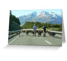 Sheep in New Zealand Greeting Card