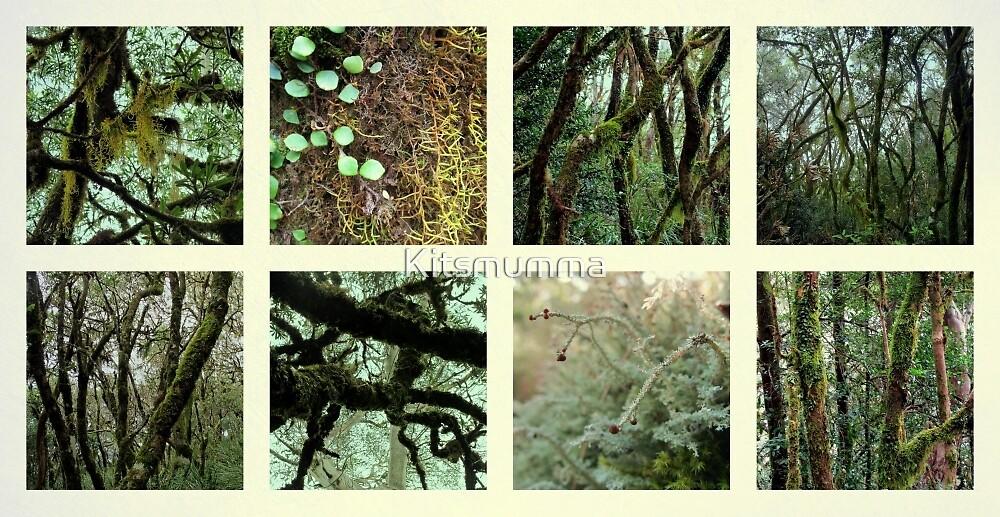 Alpine Rainforest by Kitsmumma