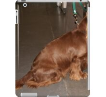 Funky Sussex Spaniel