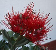 Red Bottle brush by presbi