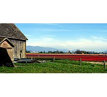 Tulip Festival Fields of Glory Photographic Print
