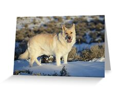Dude Dog on Snow Greeting Card