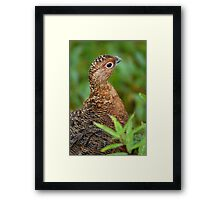 Ptarmigan Portrait Framed Print