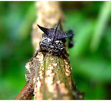 Is It A Bat? Photographic Print